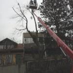 Baum_Steiger_2